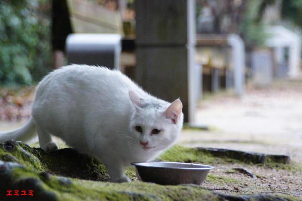 DSC04108 エミユミ.jpg