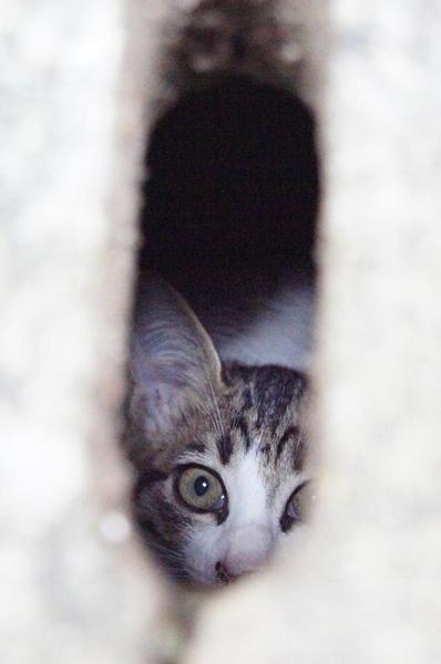 DSC04108 子猫.jpg