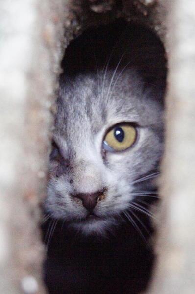 DSC04113 子猫.jpg