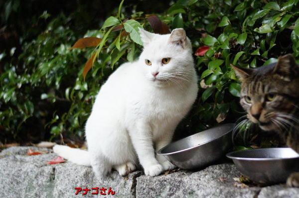 DSC04214 アナゴさん.jpg