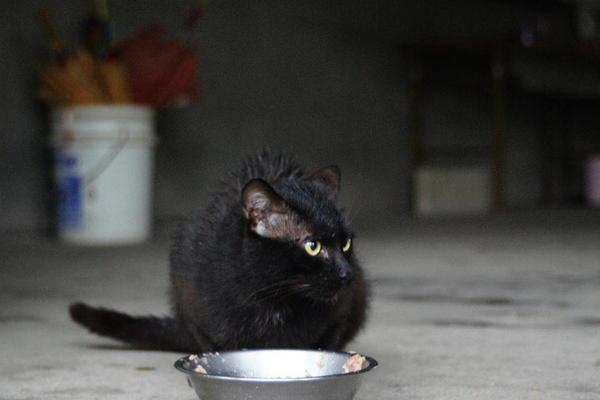 DSC04267 黒猫.jpg