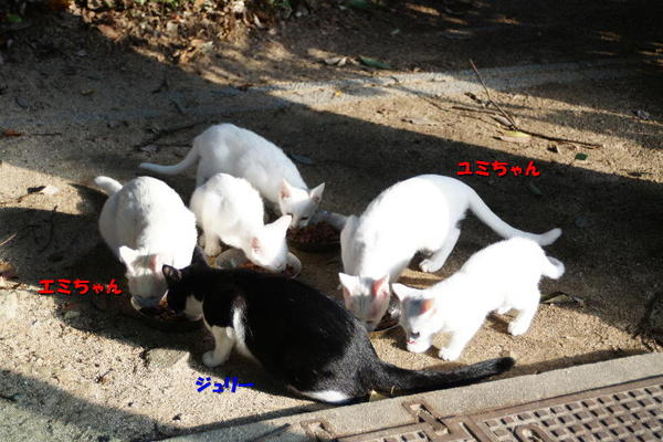 DSC04275 ジュリー、エミ、ユミ一家.jpg