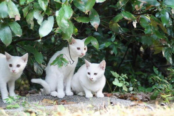 DSC04327 ユミの子猫達.jpg