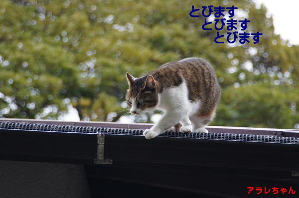 DSC04385 アラレちゃん.jpg