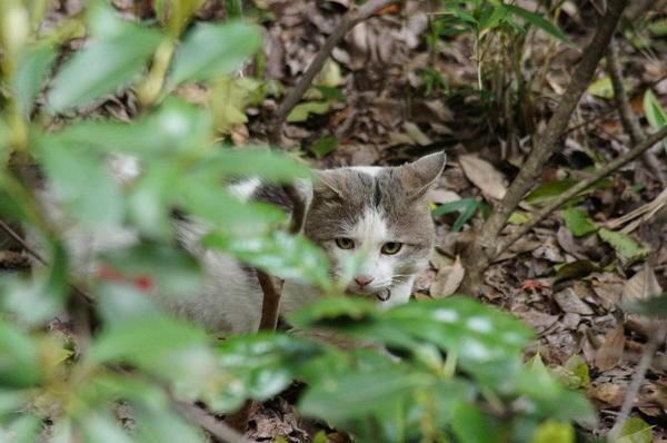 DSC04515 飼い猫.jpg