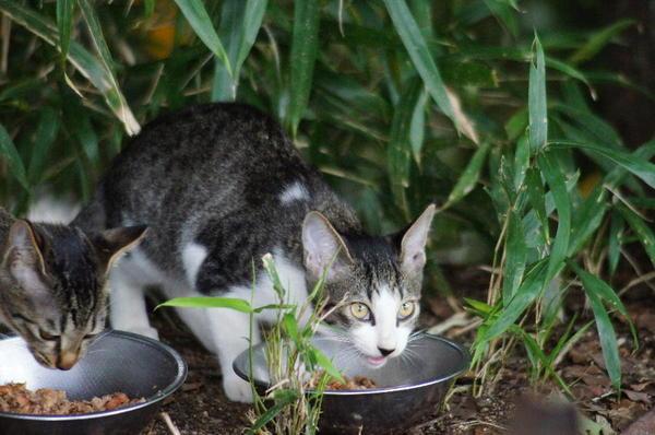 DSC04596 子猫.jpg