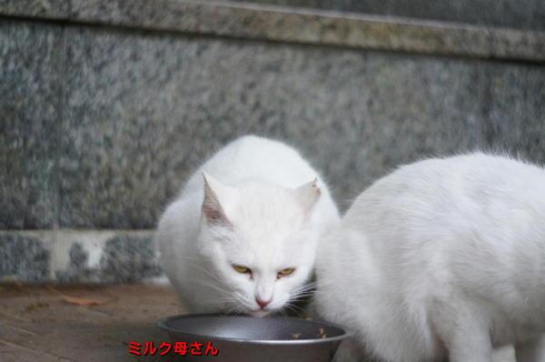 DSC04635 ミルク母さん.jpg