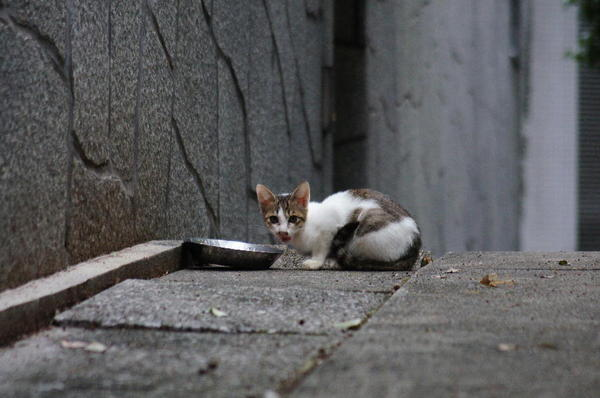 DSC04640 子猫.jpg
