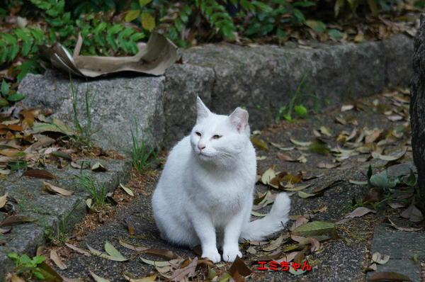 DSC04651 エミちゃん.jpg