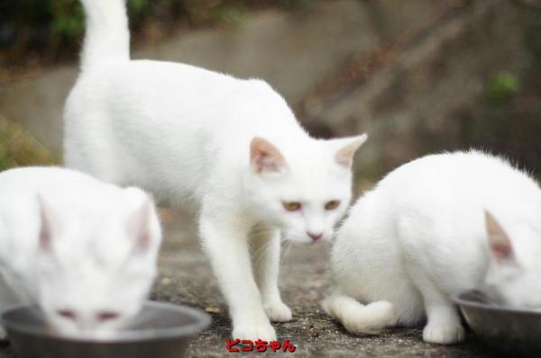 DSC04729 ピコちゃん.jpg