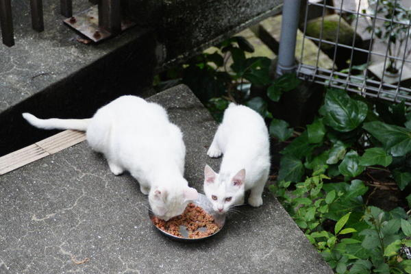 DSC04831 子猫.jpg