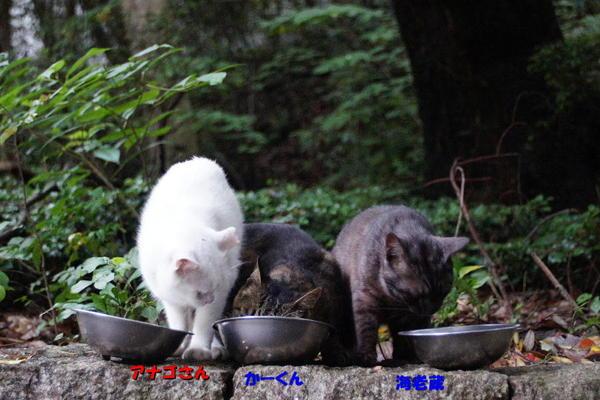 DSC04871 アナゴたち.jpg