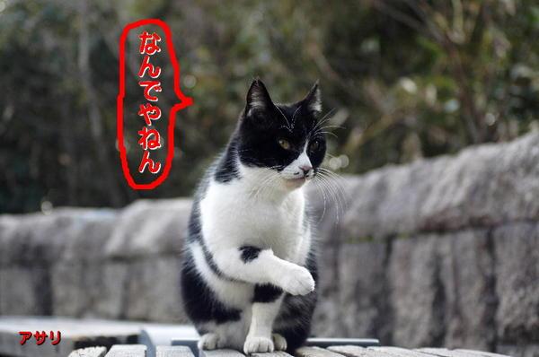 DSC04903 アサリ.jpg