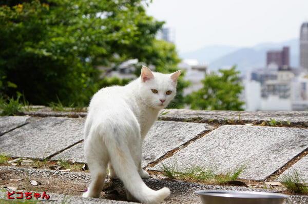 DSC04913 ピコちゃん.jpg