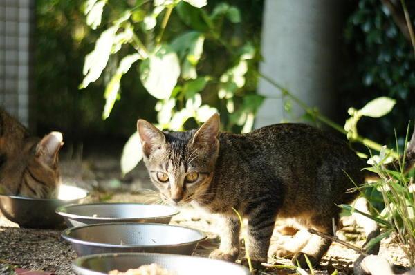 DSC05017 子猫.jpg