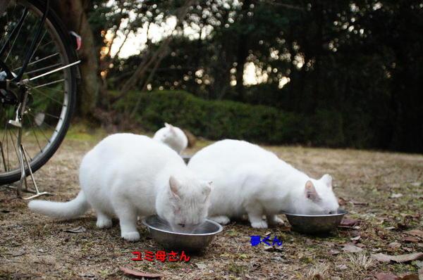 DSC05114 ユミと夢.jpg