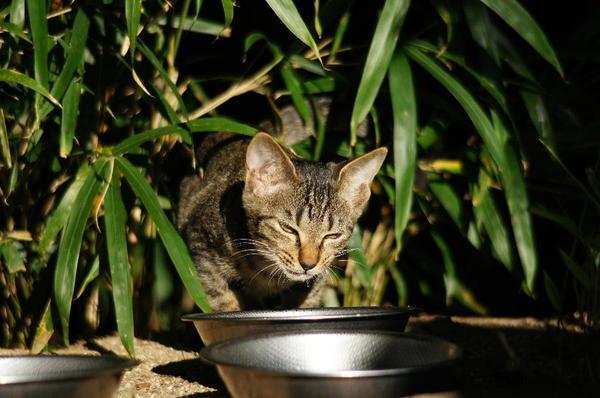 DSC05329 子猫.jpg