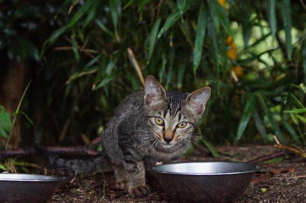DSC05556 子猫.jpg