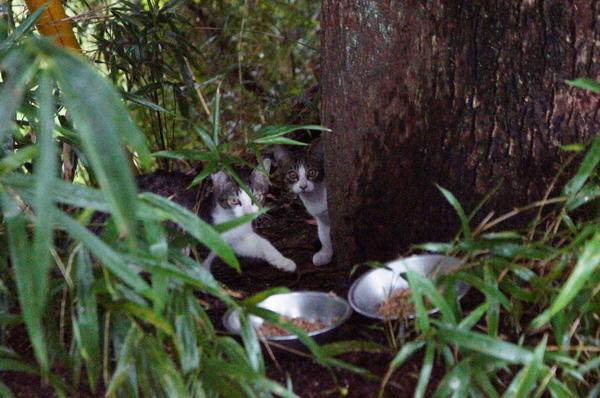 DSC05561 子猫.jpg