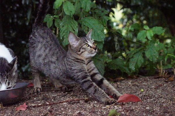 DSC05575 子猫.jpg