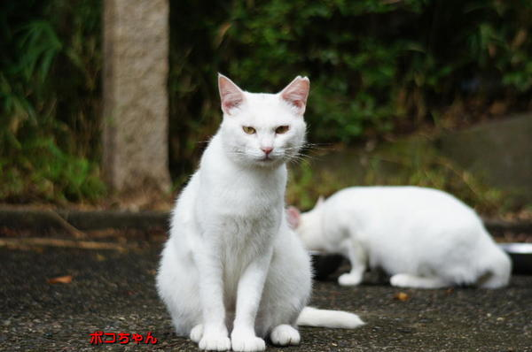 DSC05704 ポコちゃん.jpg