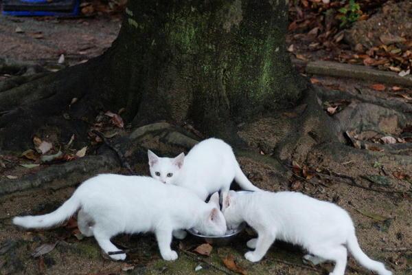 DSC05783 ユミの子猫.jpg