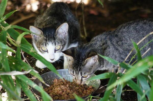 DSC05887 リコの子猫.jpg