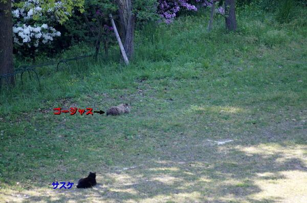 DSC05977 サスケとゴージャス.jpg