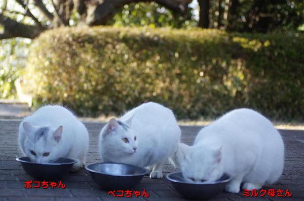 DSC06007 ペコ、ボコ、ミルク.jpg