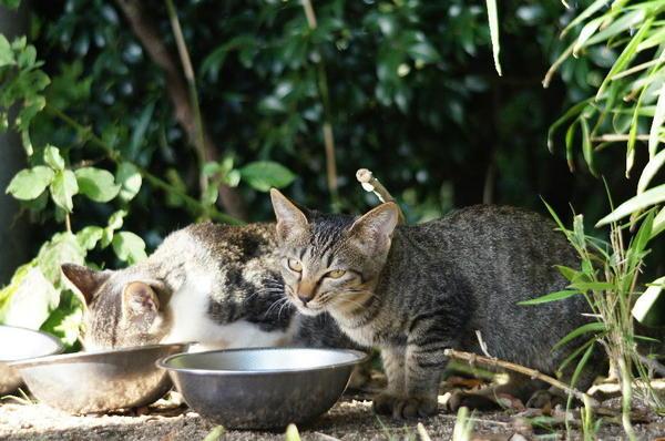 DSC06180 子猫×2.jpg