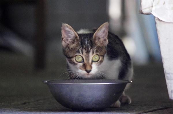 DSC06315 捨て子猫.jpg