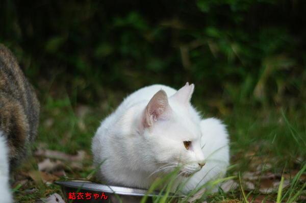 DSC06473 結衣ちゃん.jpg