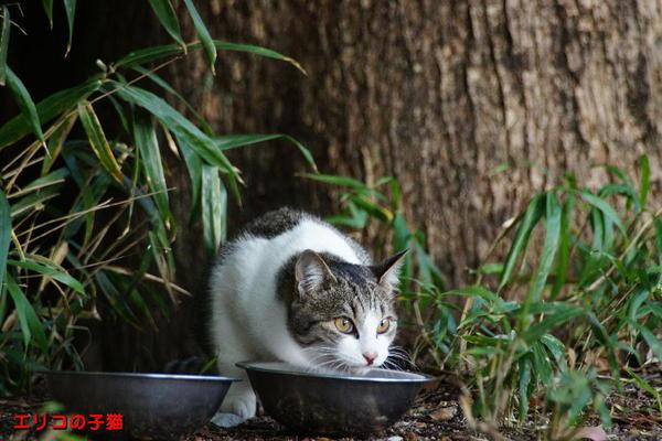DSC06478 エリコの子猫.jpg
