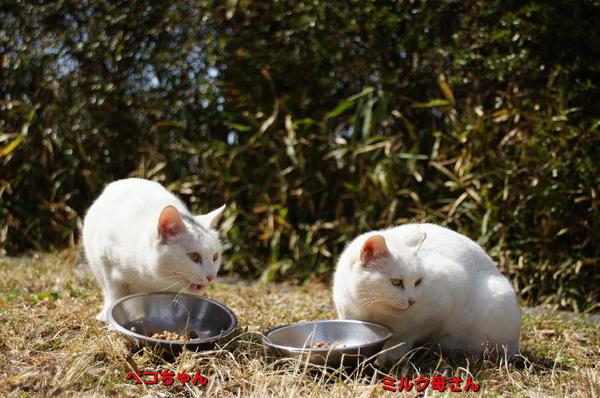 DSC06645 ペコちゃんとミルク母さん.jpg