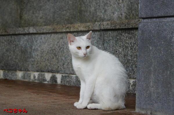 DSC06663 ペコちゃん.jpg