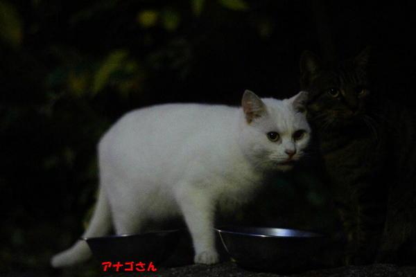 DSC06761 アナゴ.jpg