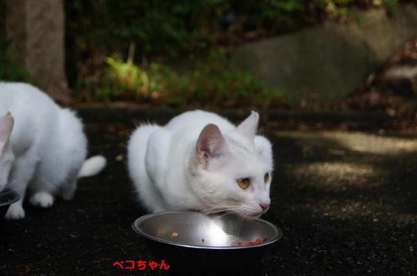 DSC06803 ペコちゃん.jpg