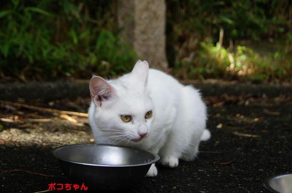 DSC06813 ポコちゃん.jpg