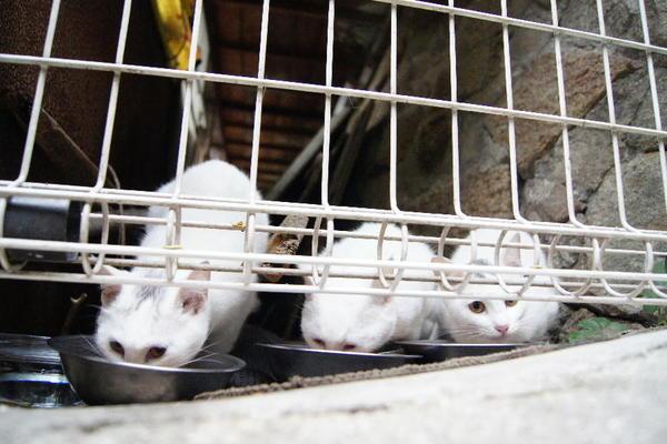 DSC06817 ミルクの子猫達.jpg