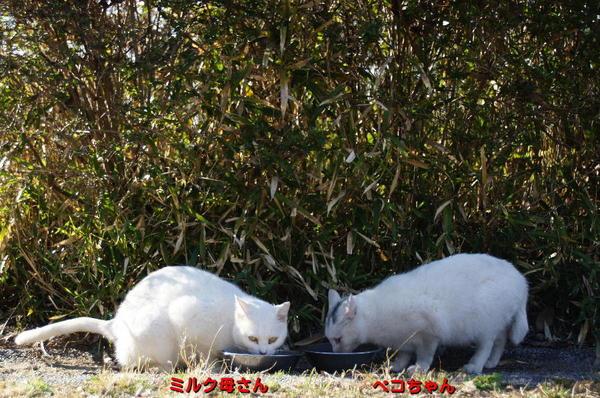 DSC06837 ミルクとペコ.jpg