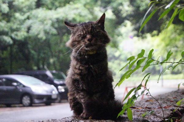 DSC06861 鈴猫.jpg