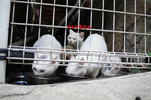DSC06936 ミルクと子猫.jpg