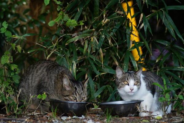 DSC07001 エリコの子猫.jpg