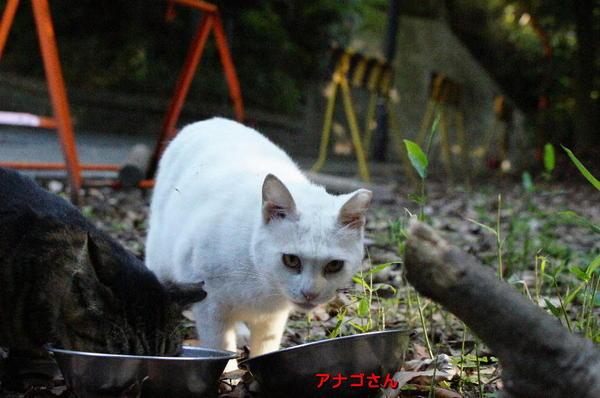 DSC07055 アナゴさん.jpg