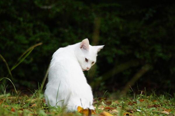 DSC07142 ユミの子猫.jpg