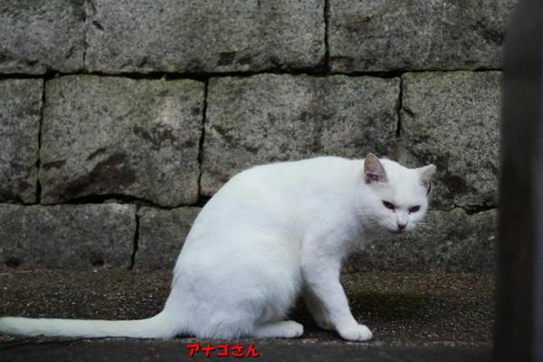 DSC07223 アナゴさん.jpg