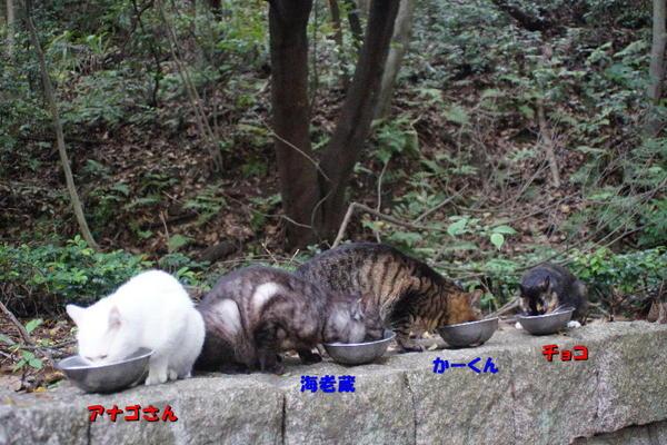 DSC07319 アナゴさん達.jpg