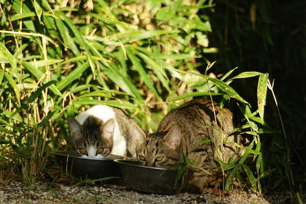 DSC07401 エリコの子猫.jpg