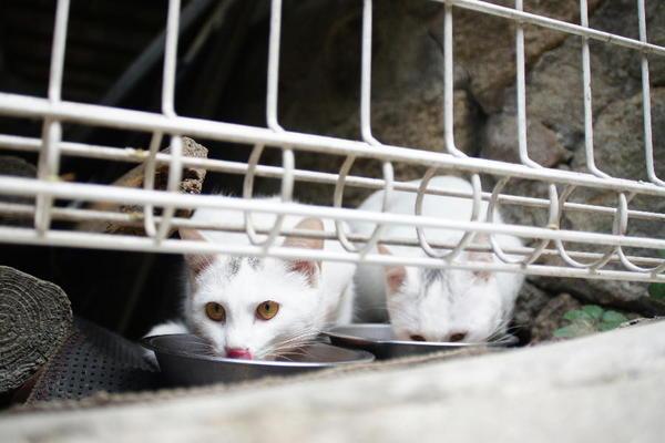 DSC07485 ミルクの子猫.jpg