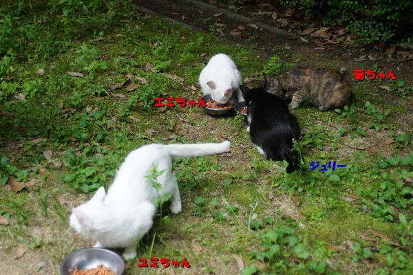 DSC07512 ロータリー.jpg